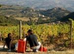 brunello_vineyards_panorama