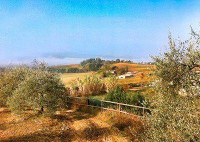 panorama_ulivi_agriturismo
