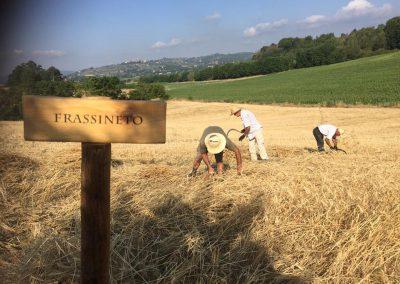 santa-vittoria-hand-harvest1-web