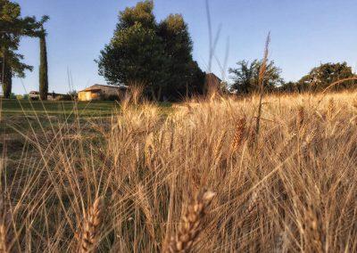 santa-vittoria-wheatfield-web