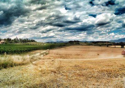 santa-vittoria-wheatharvest-web